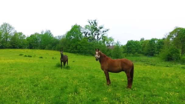 Couple of horses on the green meadow