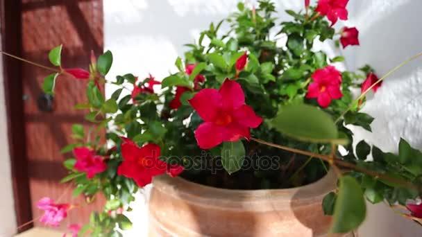 Květiny ve váze venku