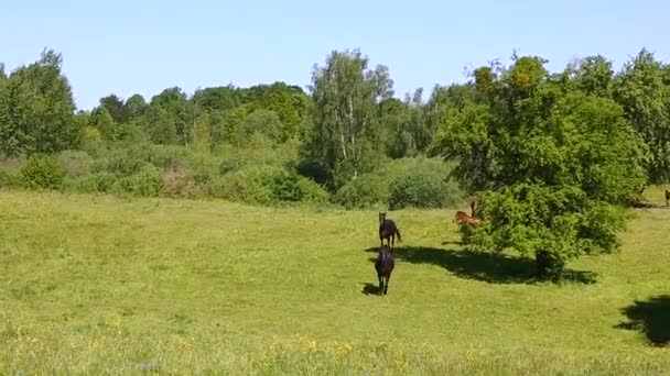 koně na louce