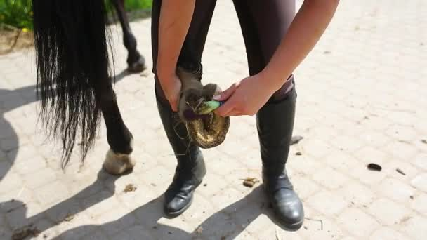 Horse hooves cleaning