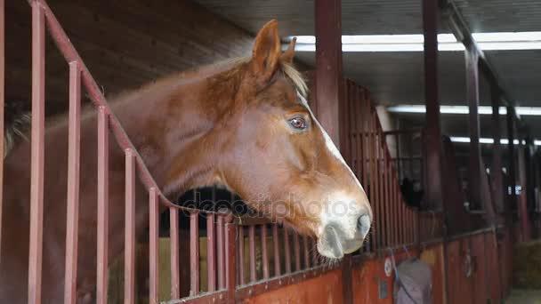 ló az istállóban