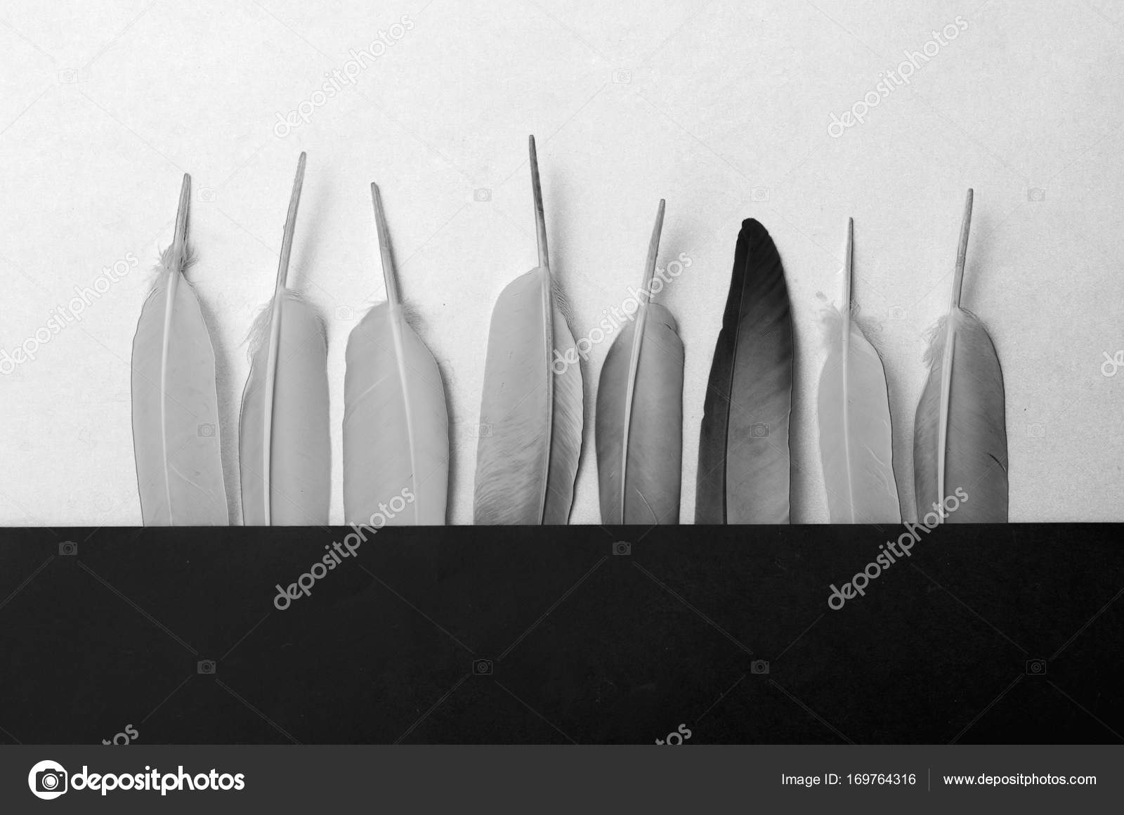 Black And White Feather Wallpaper Black White Feathers Art