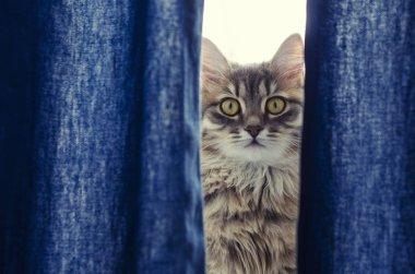 Beautiful tabby cat looking at camera.