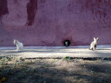 three homeless kittens near their shelter