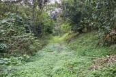 Foresta. Priorità bassa della giungla. Foresta pluviale tropicale, con il verde degli alberi, arbusti e fogliame. Escursione allaperto strada a Coatepec veracruz Messico.