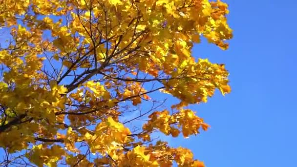 Sun shining through fall leaves blowing
