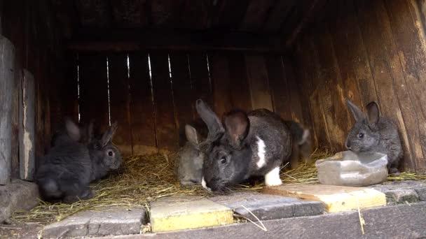 Domácí králíci v kleci. Bunny čichání. Domácí chov