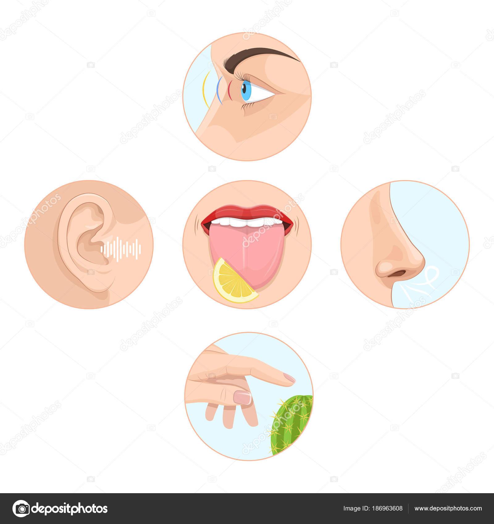 Satz von fünf Sinne Mann. Anatomie, menschliche Organe — Stockvektor ...