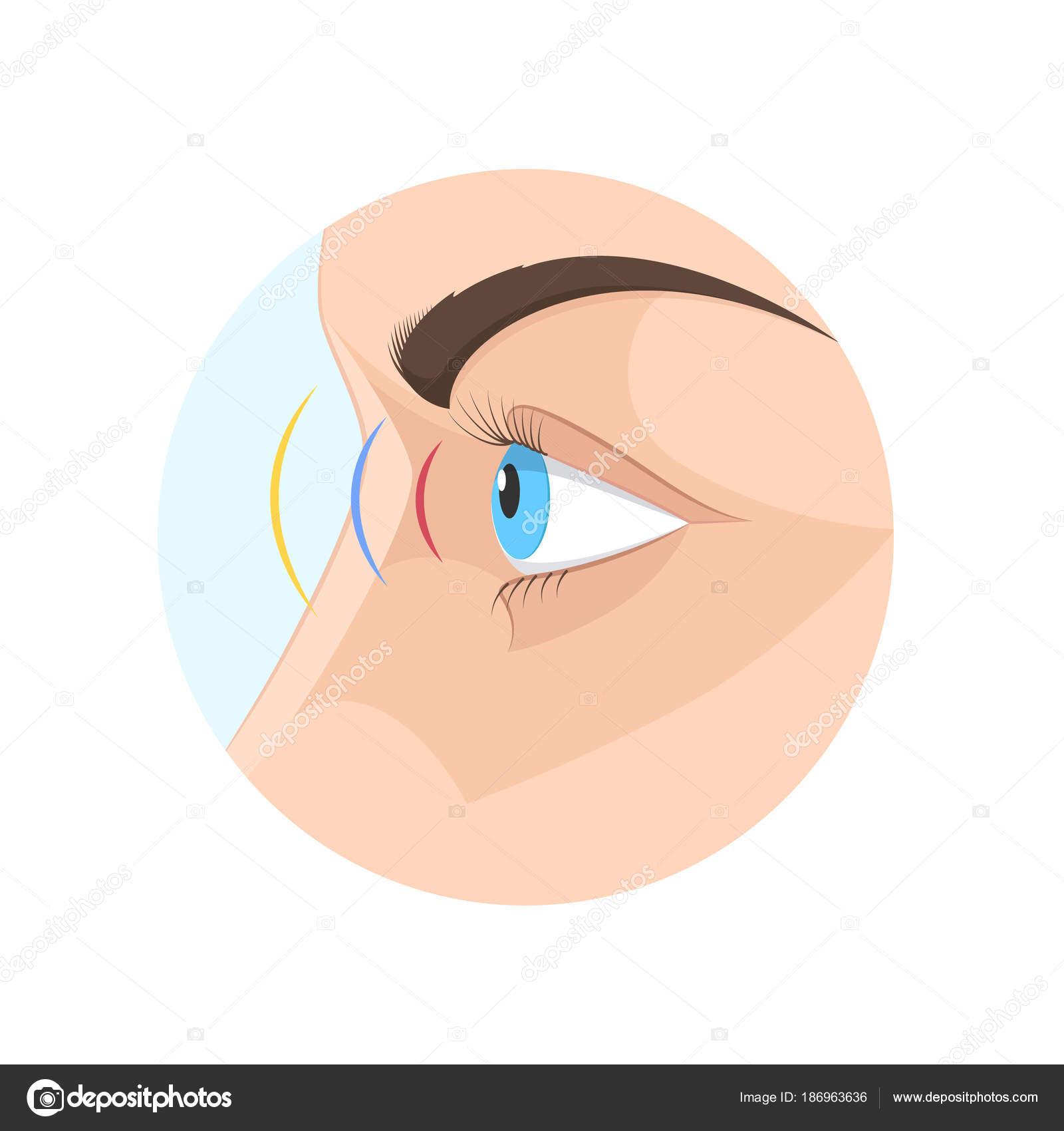 Cuerpo humano vista, ojo. Biología, anatomía hombre y órganos ...