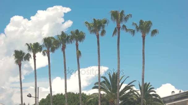 Palmy a zamračená obloha
