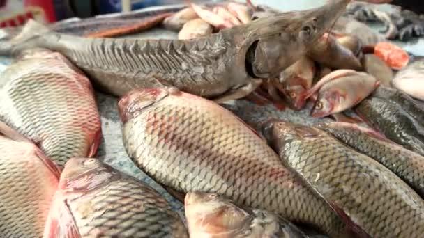 Rozumná volba ryby