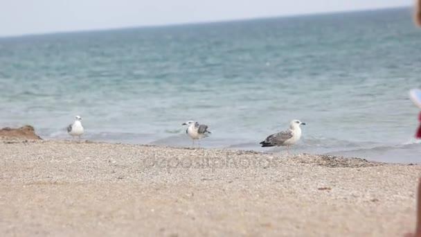 Cormorants walking near the sea.