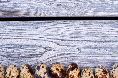 Row of quail eggs.