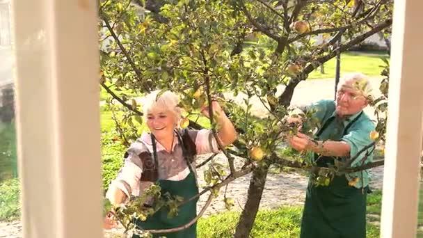 Pár zahradníci pracující.