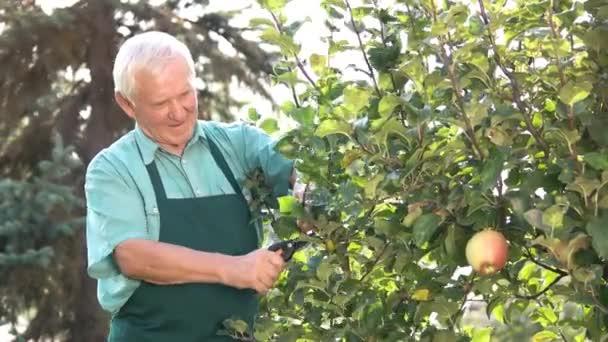 Vedoucí zahradník s nůžkami pracovat