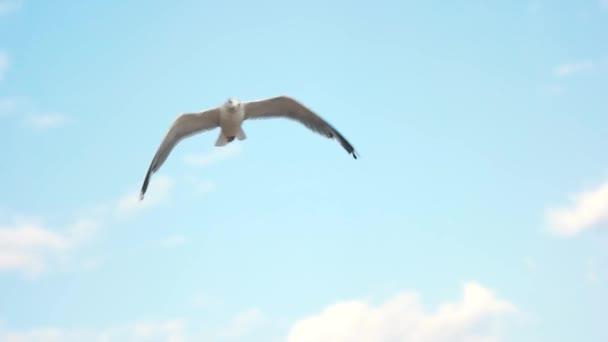 Sirály repül, lassú mozgás.