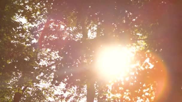 Laub und strahlende Sonne.