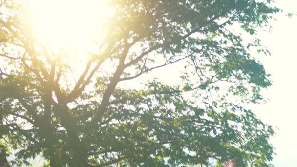 Üppiger Baum und Sonne