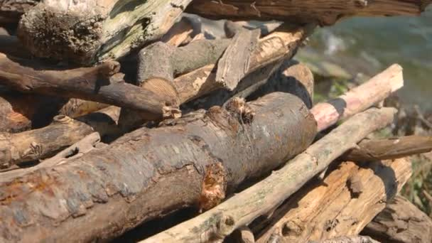 hromadu dřeva