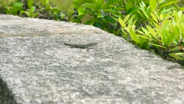Small lizard outdoors.