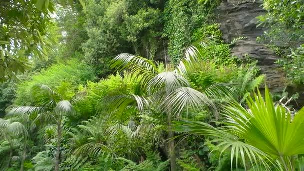 grüne Pflanzen und Felsen.