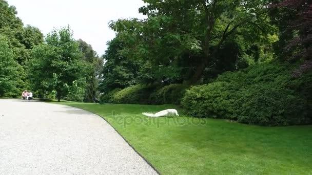 bílý páv v parku.