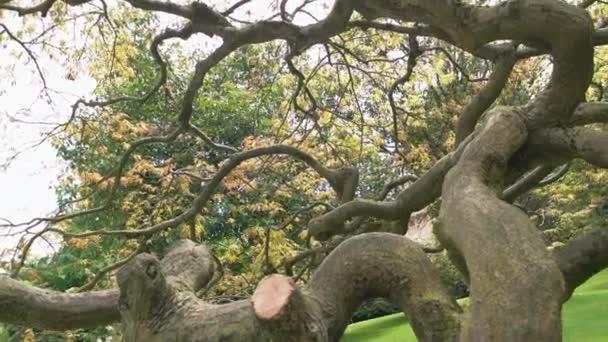 Trockenen Baum mit gedrehten Zweigen