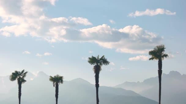 Pálma fák, és az ég, a hegyek