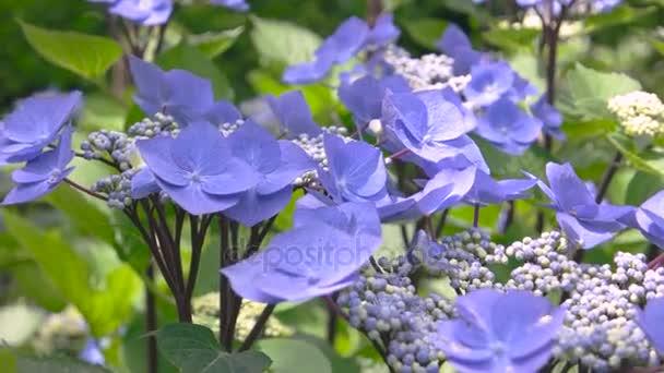 Světle fialové květy zblízka