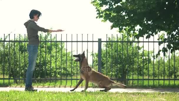 Pes je rychle provádění příkazů.