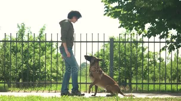 Hund führt Befehle zur Belohnung aus.