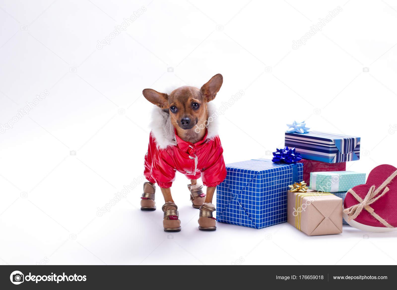 Niedliche kleine Hund mit Geschenkkartons — Stockfoto © Denisfilm ...