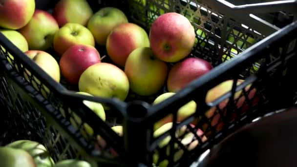 Hand taking apples from crate.
