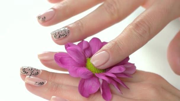 Pěstěné ruce a chryzantéma, pomalý pohyb.
