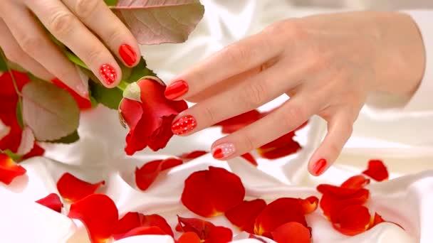 Manikűr piros és vörös rózsa, lassú mozgás.