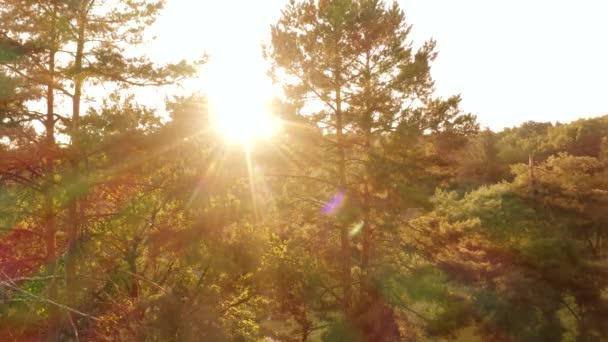 Večerní sluneční paprsky zářící lesními stromy.
