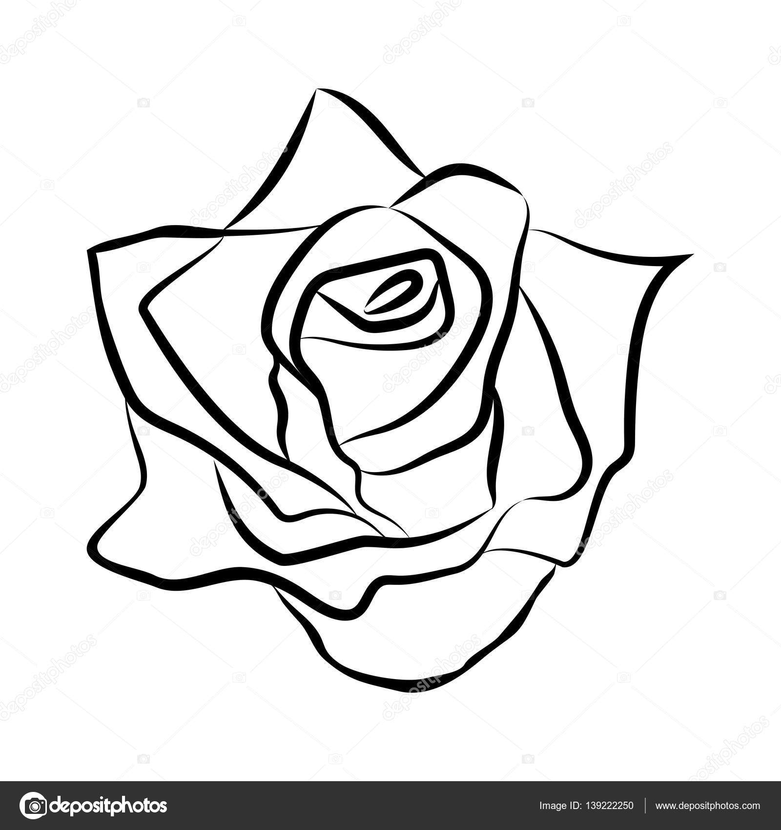 Dessin au trait esquisse de rose image vectorielle madozi 139222250 - Dessins de rose ...