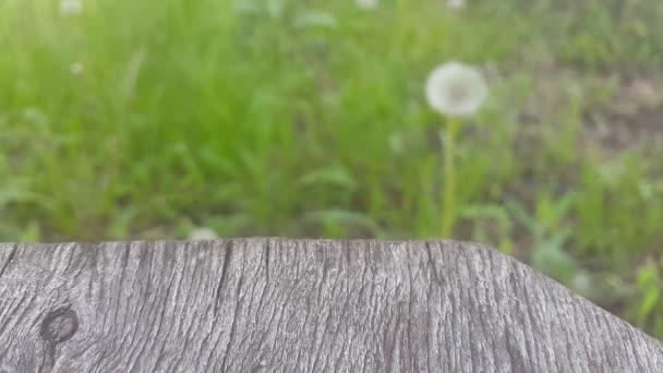 Fából készült asztal és a pitypang a háttérben.