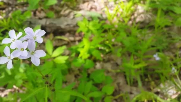 Bílé květy na sněhová vločka