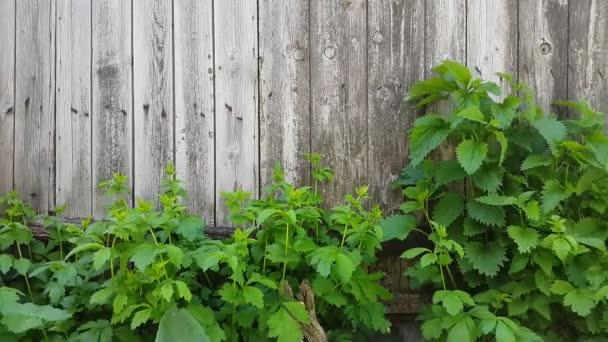 Skutečné staré dřevěné textury starého plotu s zelenou trávou pod ním