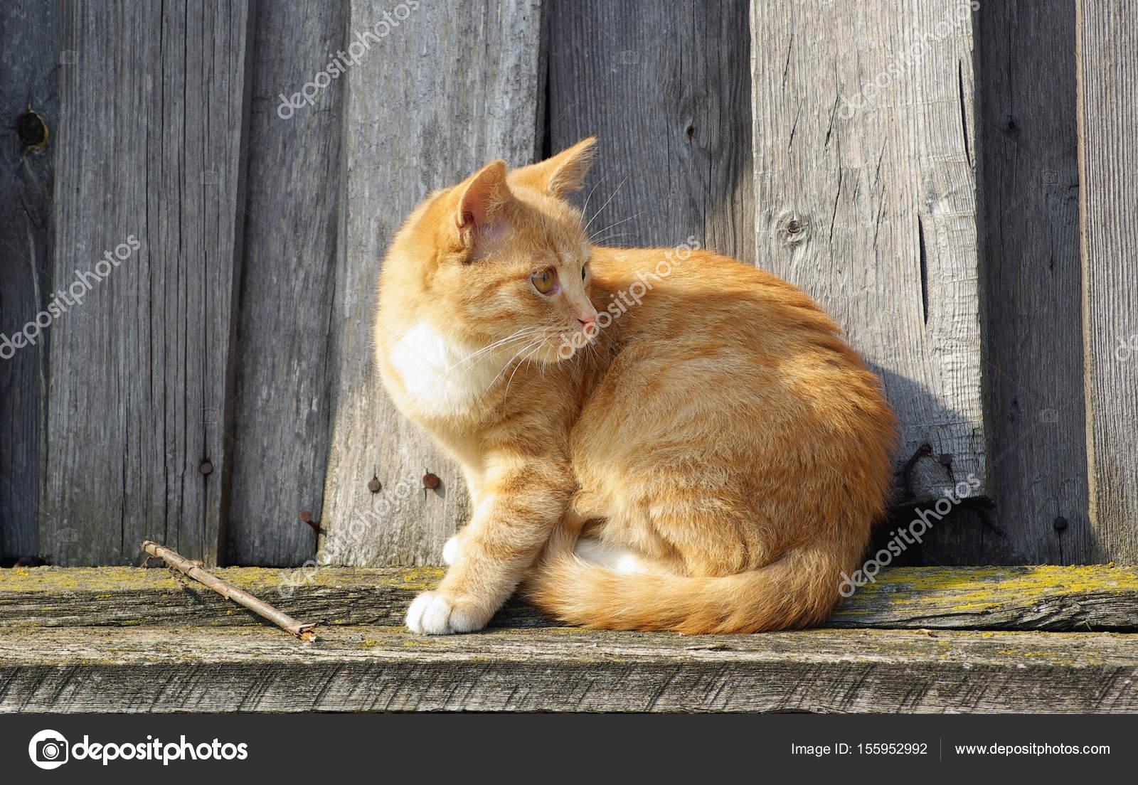 Wszystkie nowe Kot i drewna ogrodzenia — Zdjęcie stockowe © Veresovich #155952992 PT18