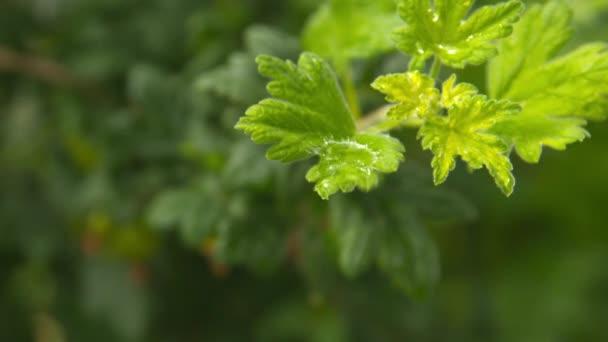 kapka vody na list