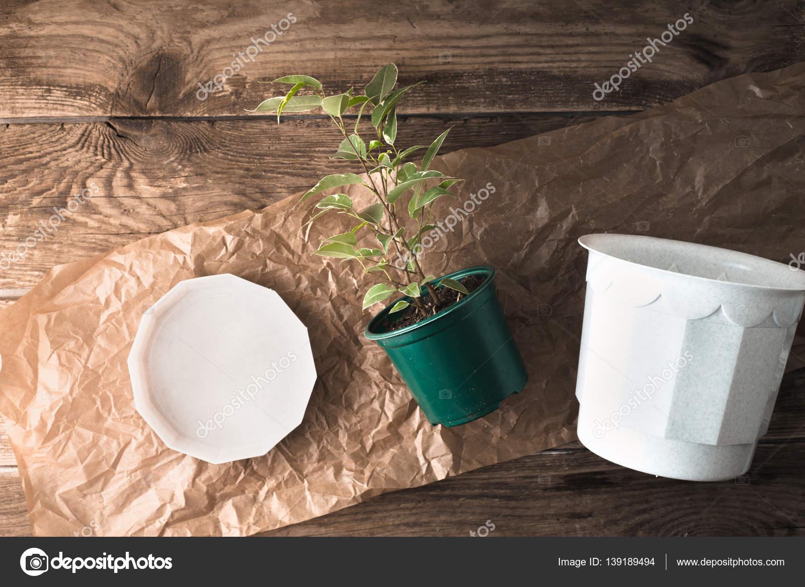 ficus mit blumentopf aus holz hintergrund oben anzeigen — stockfoto
