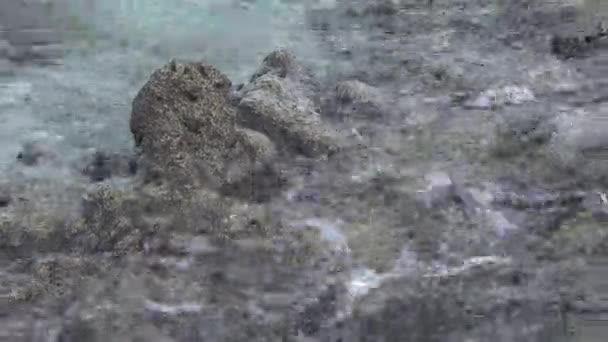 Skalnaté pobřeží a vlny. Indický oceán video