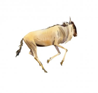Handpainted watercolor of wildebeest illustration isolated on wh