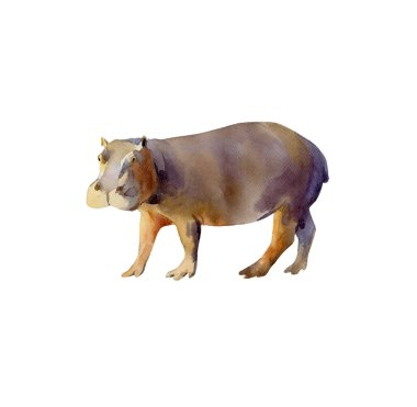 Handpainted watercolor illustration - side view of a massive hippo walking, isolated on white background