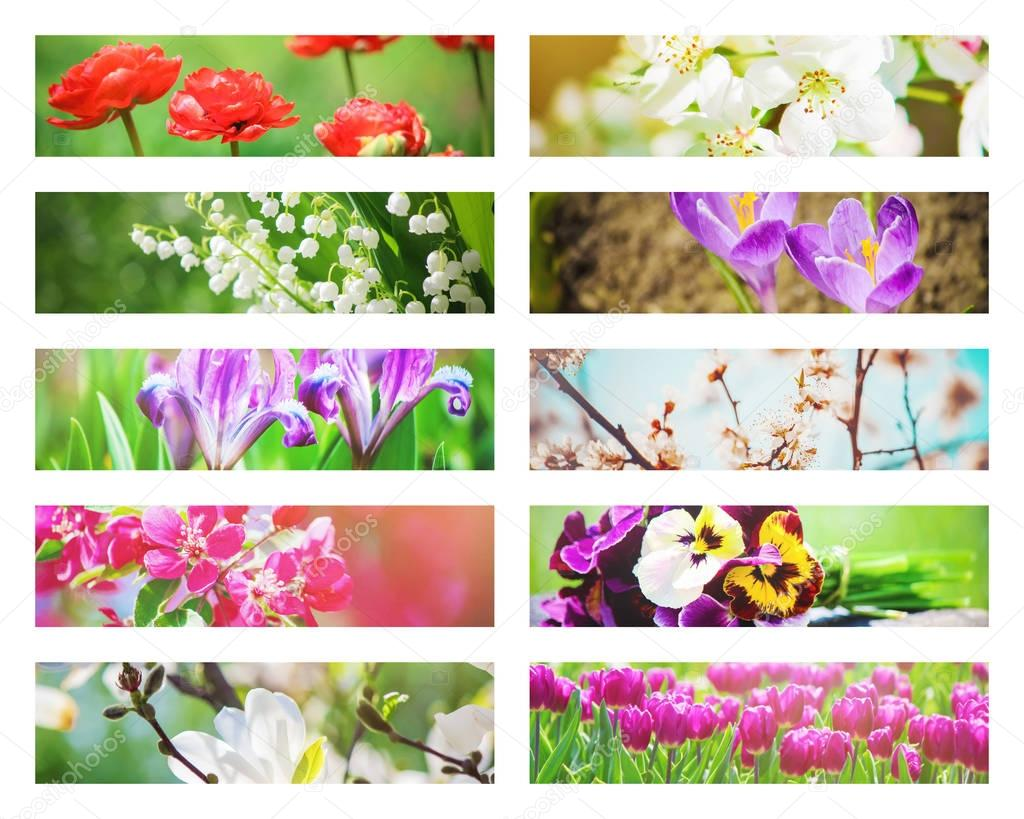 Many pictures of flowers. Collage. Selective focus