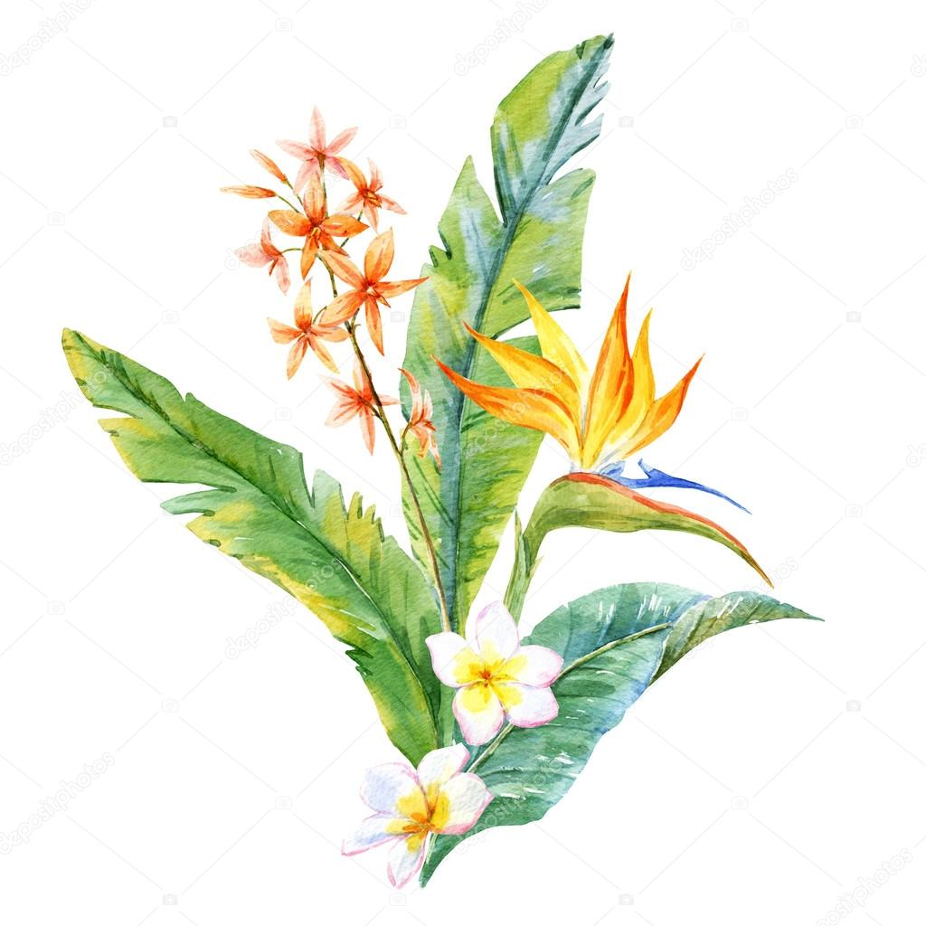 Watercolor tropical composition