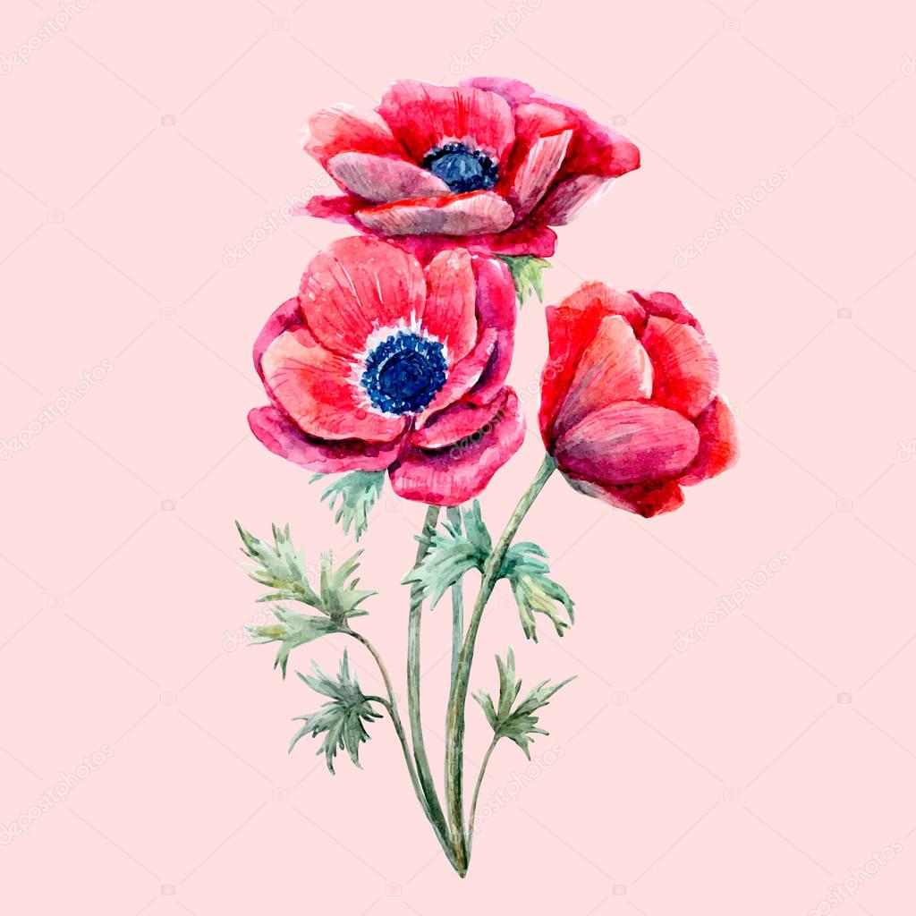 Watercolor red anemone flower