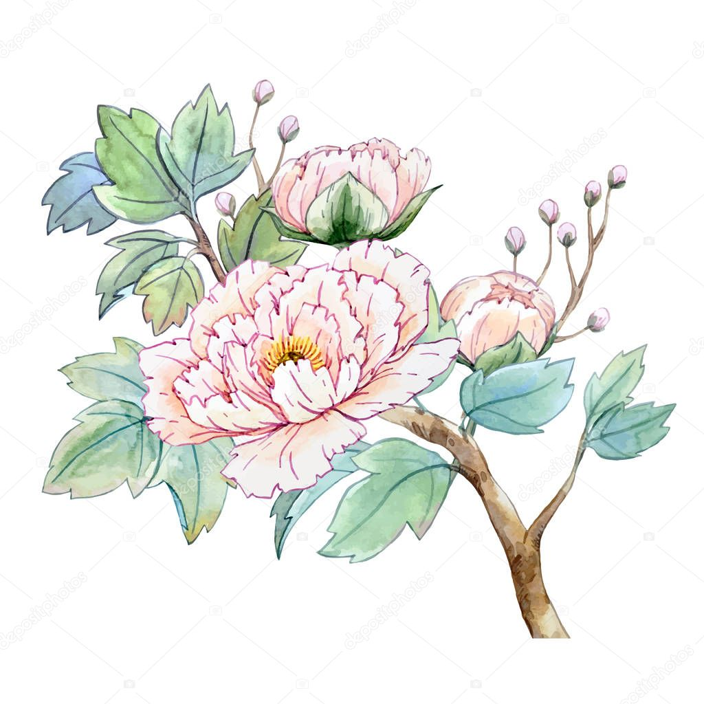 Watercolor chinese peony flower